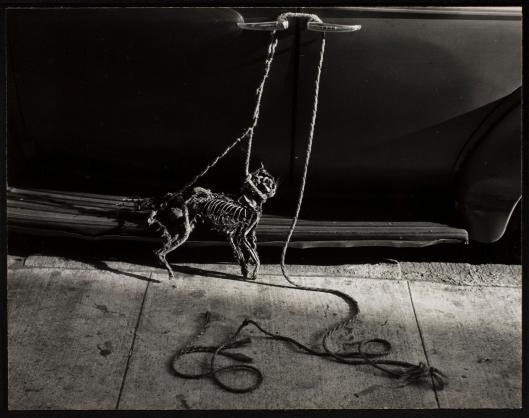 catskeleton1953